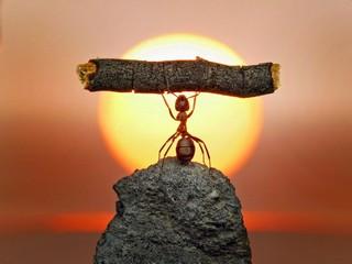 муравей-пауэрлифтинг-песочница-удалённое-117542